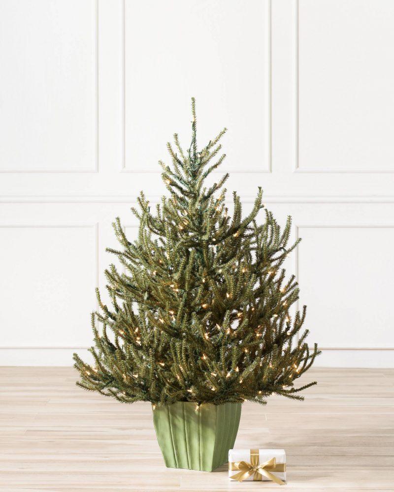Pflege Tipps für den Weihnachtsbaum im Topf