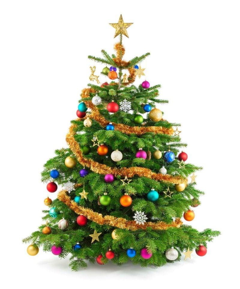 Weihnachtsbäume kaufen