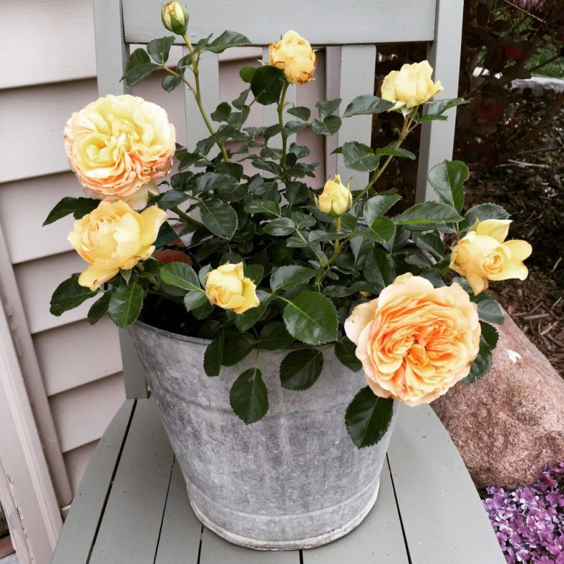 Gartendeko Rost Blumenkasten
