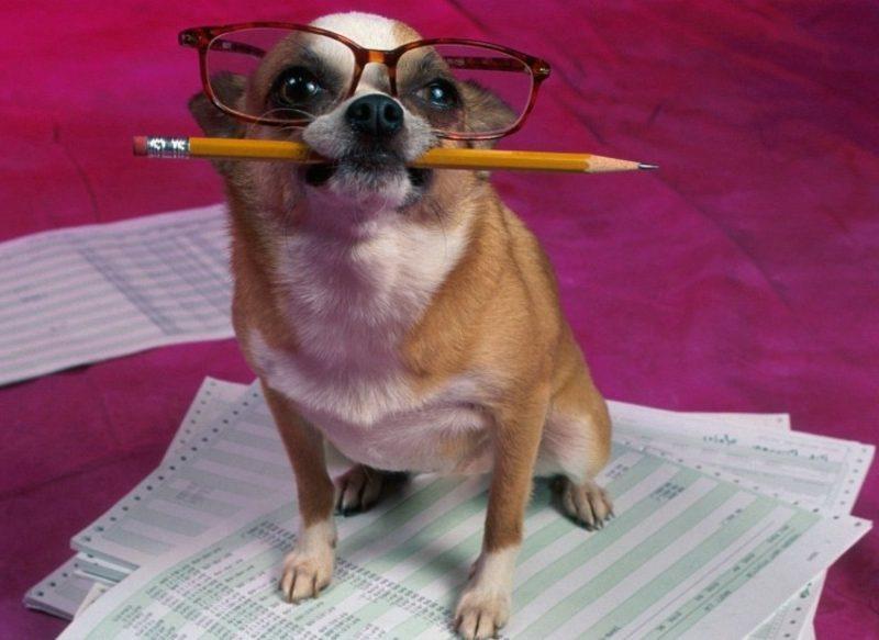 Tierbilder als lustige Gruβkarten Hund als Student