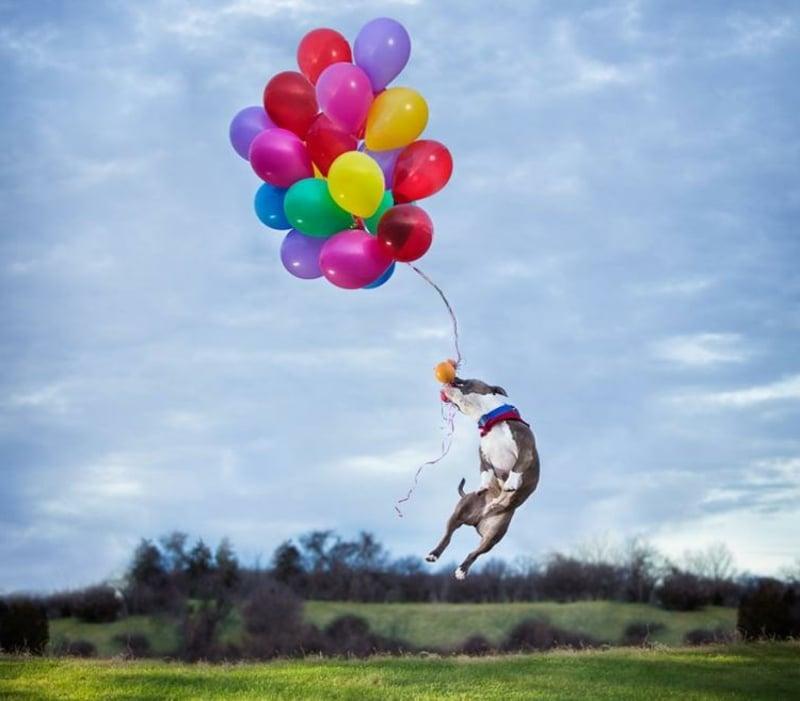 lustige Geburtstagskarte Hund mit Ballonen