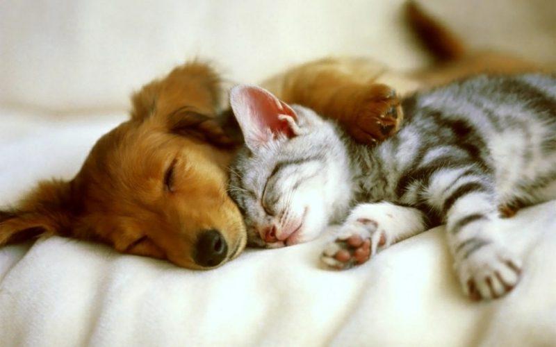 Tierbilder als lustige Gruβkarten Hund und Katze