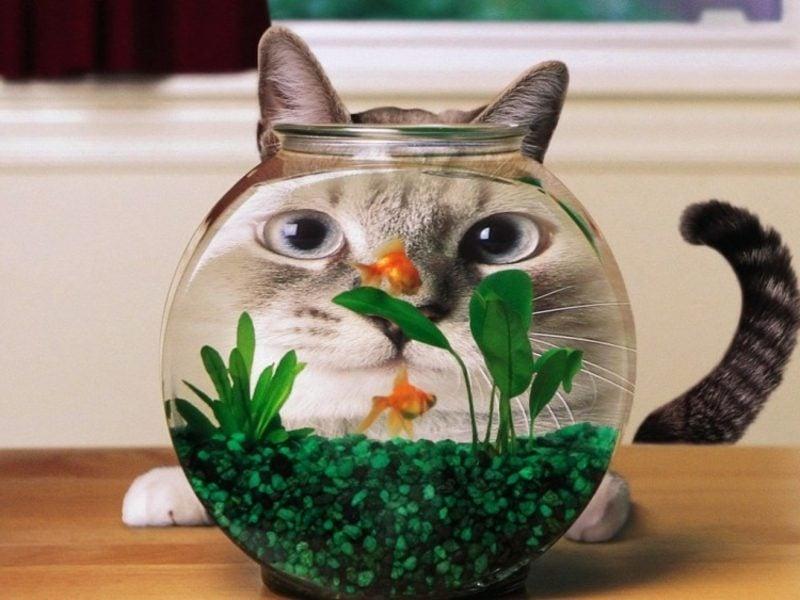 lustige Gruβkarten Ideen und Inspirationen Katze und Aquarium
