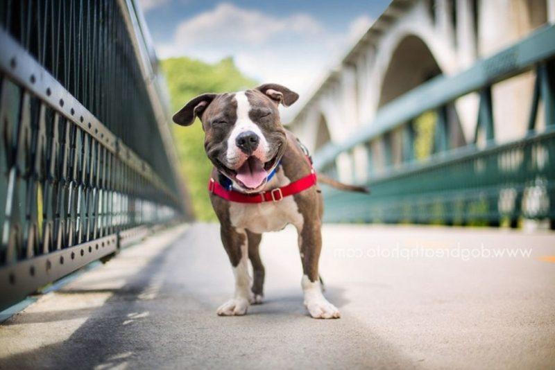 Tierbilder als humorvolle Gruβkarten Hund