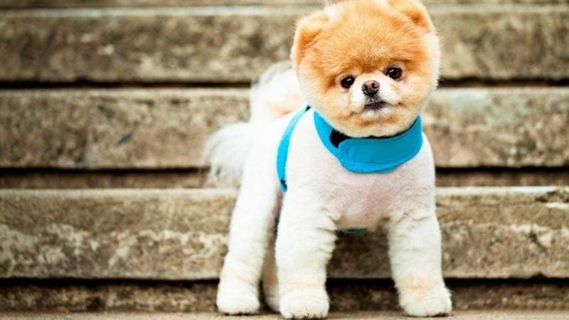 lustiges Foto Hund