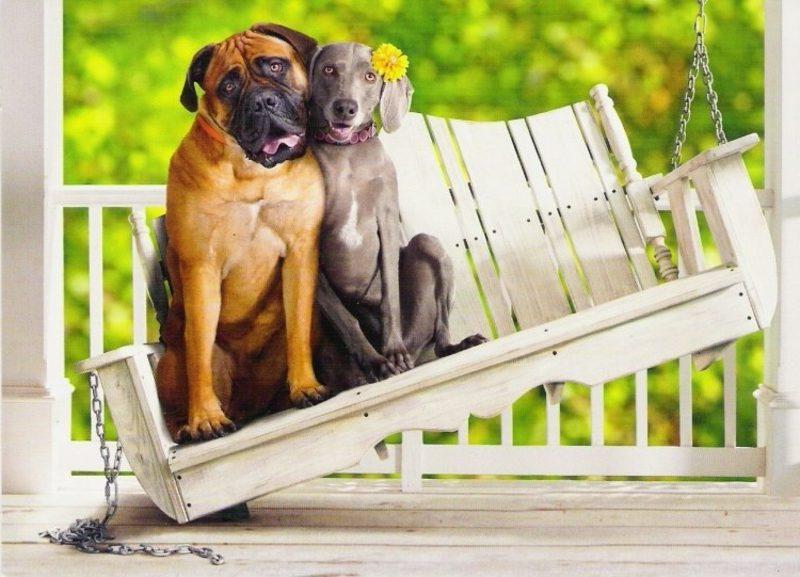 zwei Hunde als Liebespaar humorvolle Gruβkarten