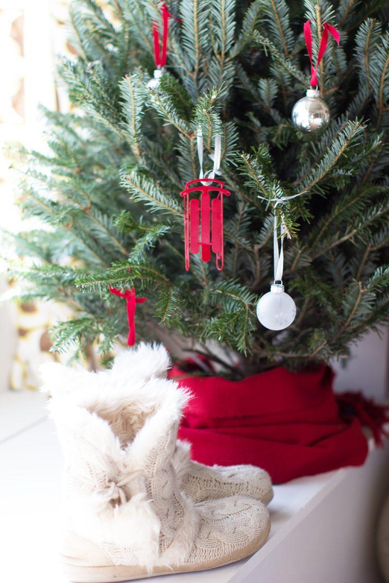 Weihnachtsbaum im Topf pflanzen