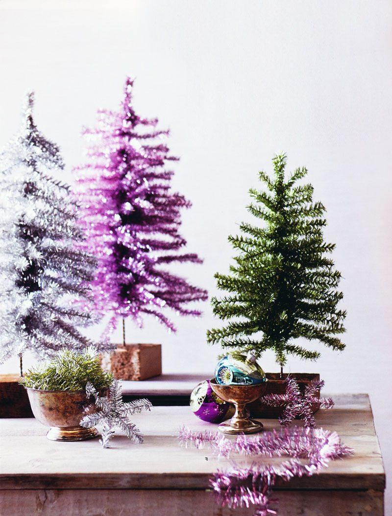Weihnachtsbaum im Topf ist schöne Zimmerpflanze nach dem Fest