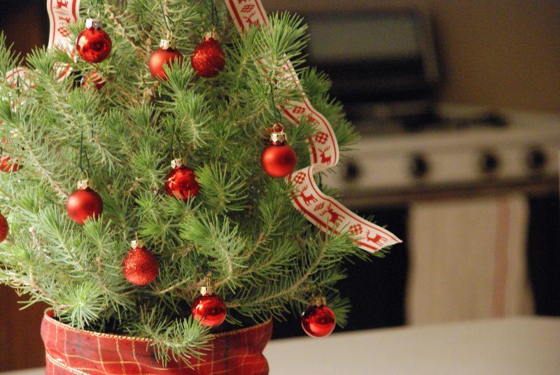 weihnachtsbaum im topf so h lt die tanne l nger weihnachtsdeko ideen zenideen. Black Bedroom Furniture Sets. Home Design Ideas