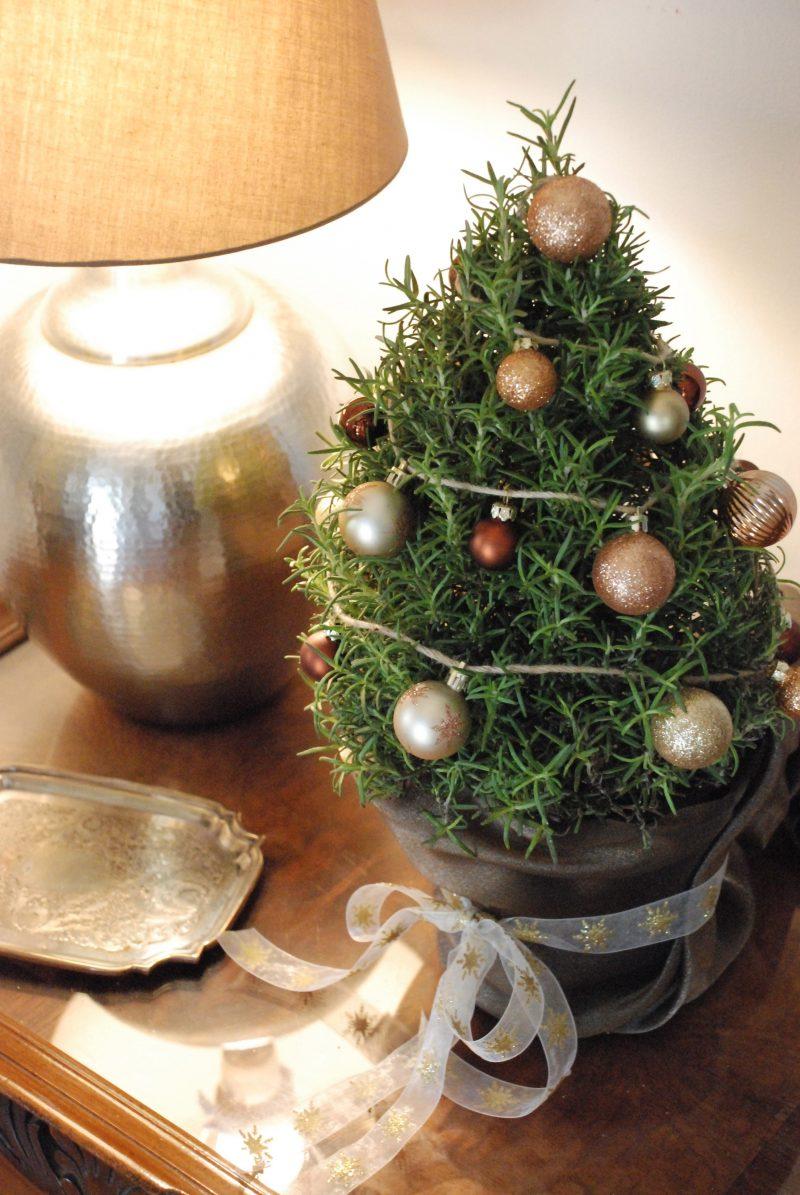 Weihnachtsbaum im Topf ist die perfekte Dekoration