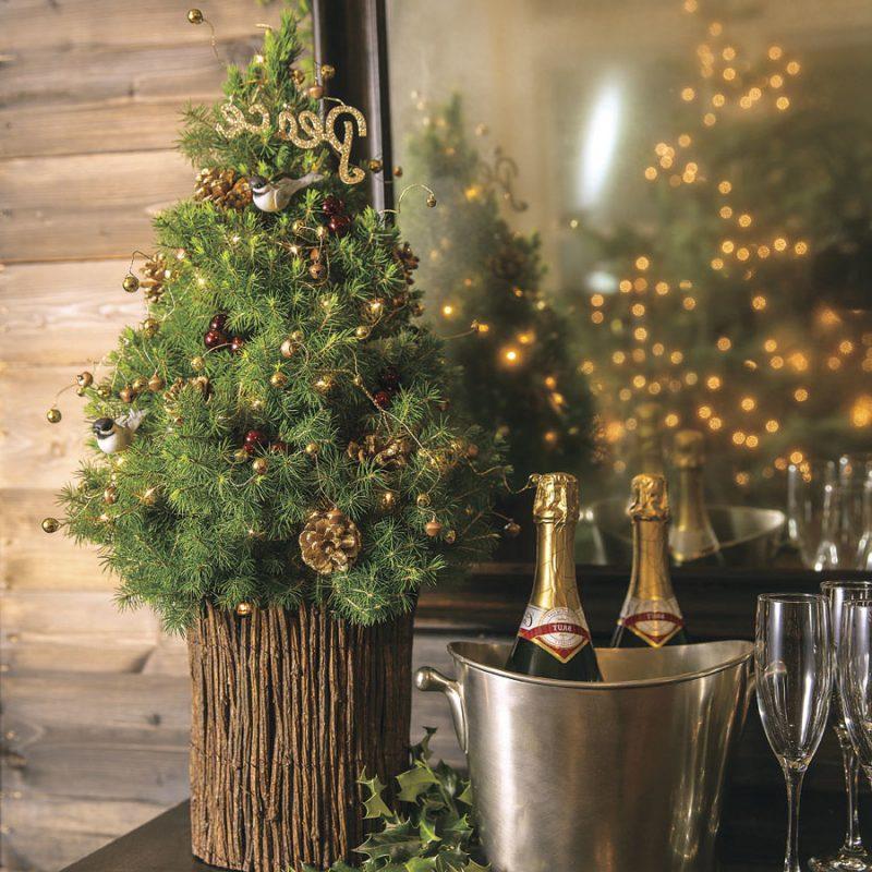 Weihnachtsbaum im Topf hält länger