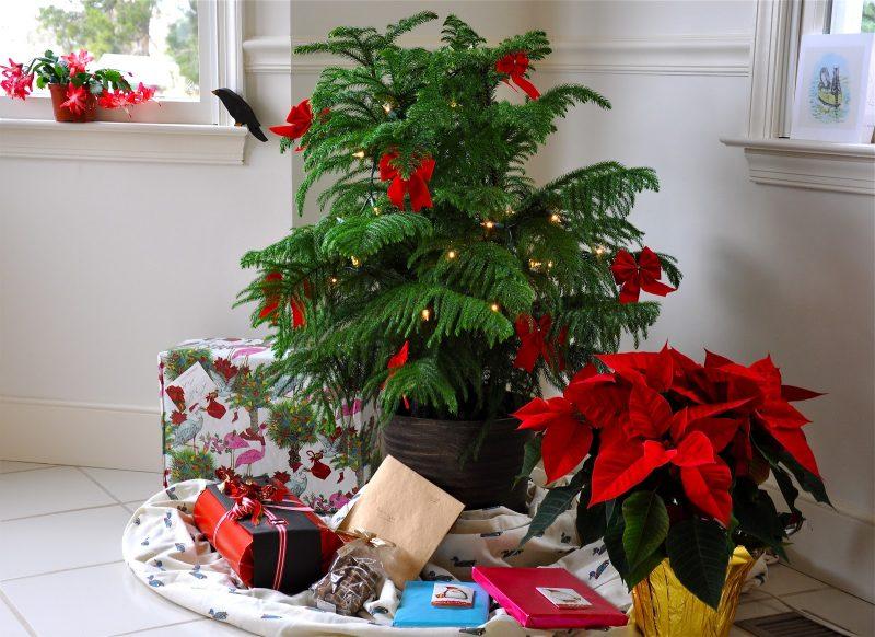 Weihnachtsbaum im Topf - mehr Platz für Geschenke