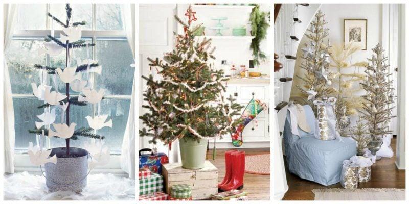 Weihnachtsbaum im Topf - verschiedene Arten