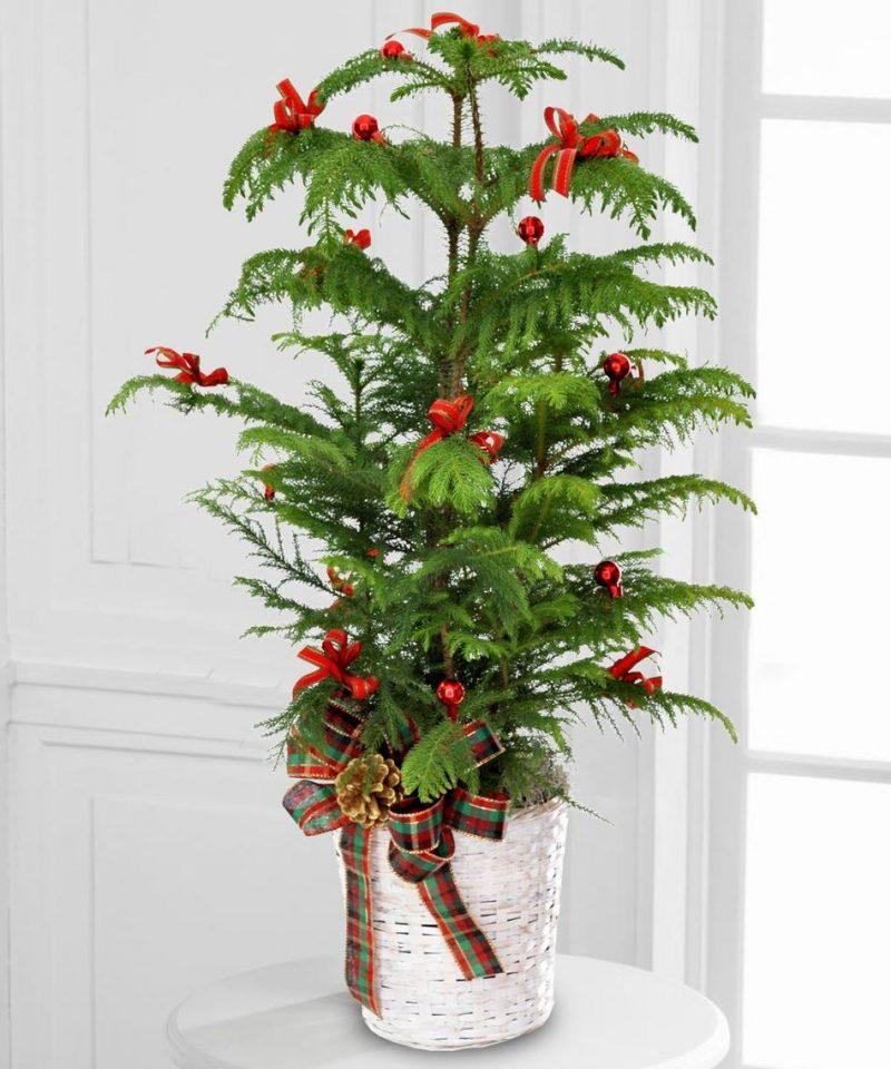 Weihnachtsbaum im Topf - Vorteile