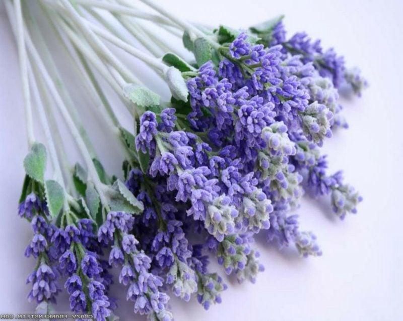 Lavendel zarte Blühten in Lila