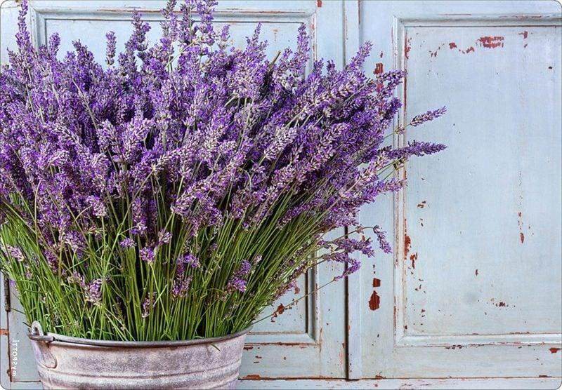 Lavendelstrauch im Blumentopf Vintage Stil