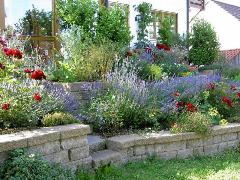 Lavendel im Garten Landschaftsbau