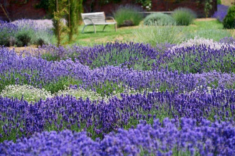 kreative Ideen Gartengestaltung Lavendel