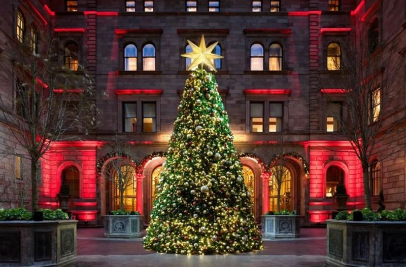 christmas trees new york