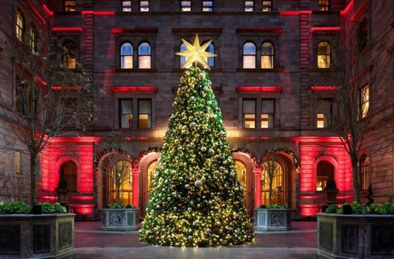 christmas trees new york