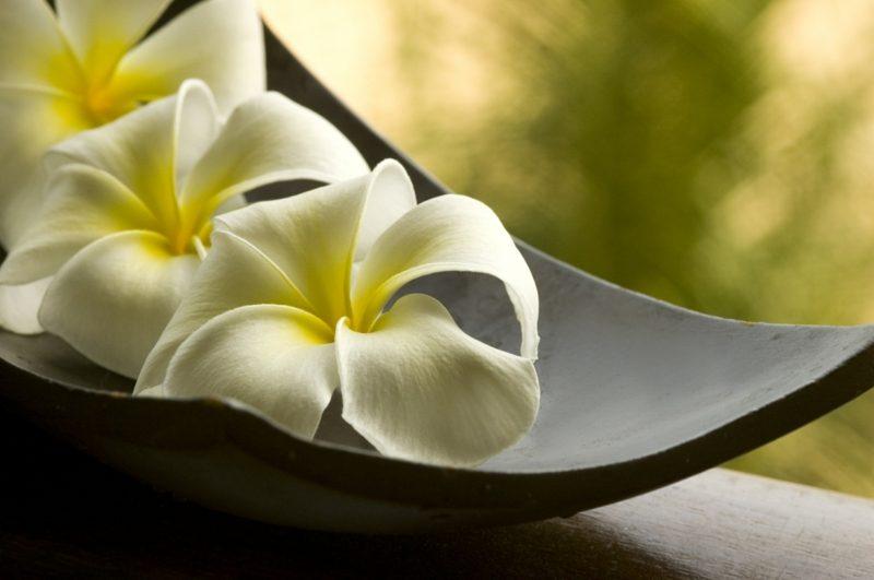 orchideenarten spa flowers
