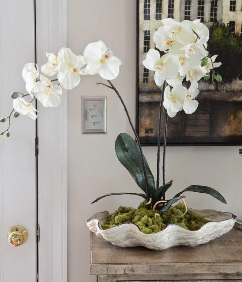 orchideenarten deko