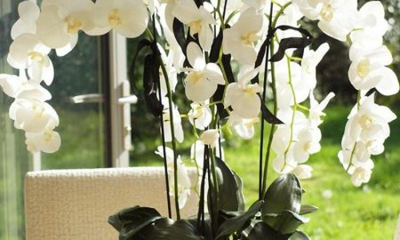 orchideenarten-my-favorite-flower