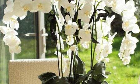 orchideenarten-my-favorite-flower