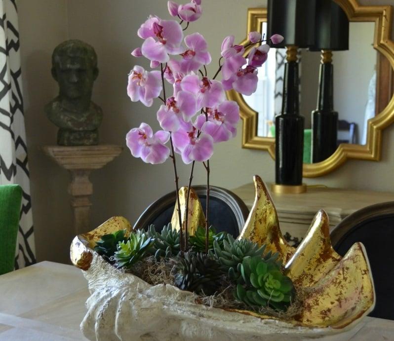orchideenarten orchideen in schale