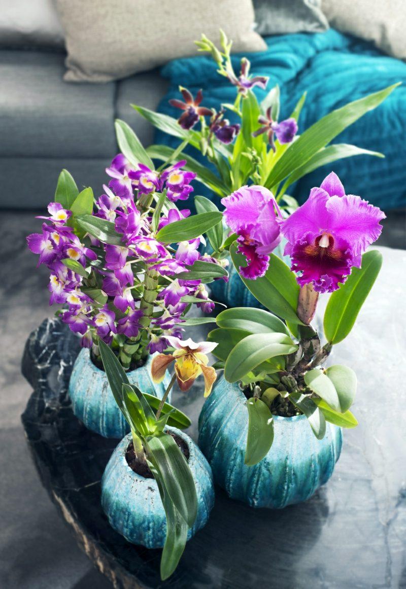 orchideenarten wohnideen