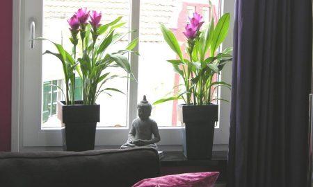 Holen Sie sich ein Stück Natur in die Wohnung!