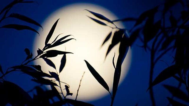 Mondkalender 2015 für Garten Vollmond Auswirkung auf die Pflanzenwelt