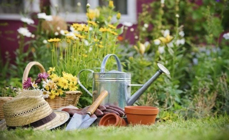 Mondkalender 2015 für Garten bei Gartenarbeit die Mondphasen beachten