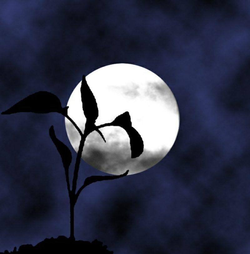 Verbindung zwischen Mond und Pflanzen