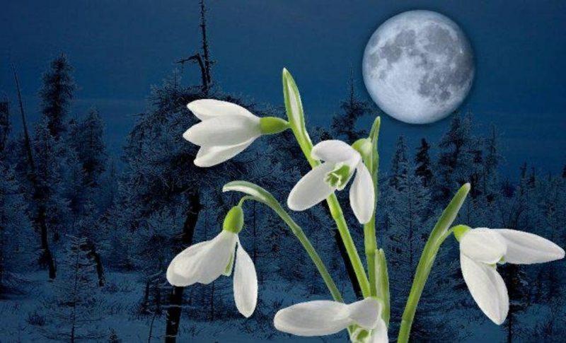 Mondkalender Verbindung zwischen den Mondphasen und der Pflanzenwelt