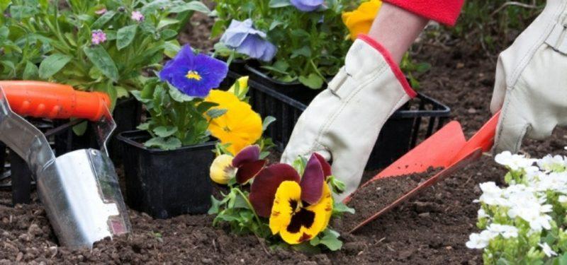 Mondkalender 2015 für Garten Blumen pflanzen