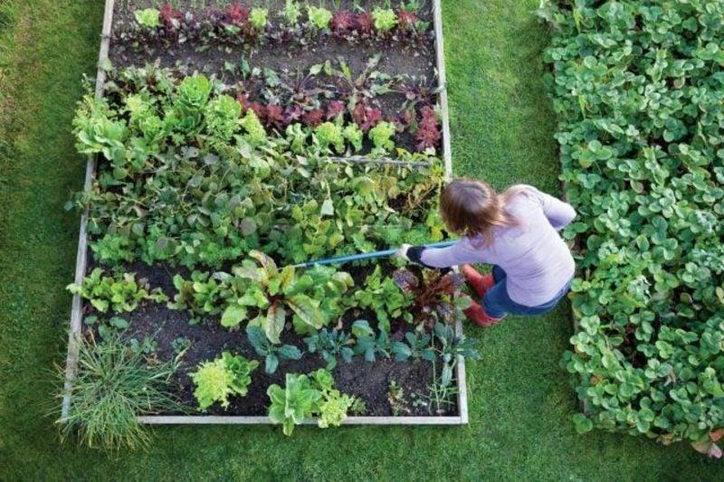 Mondkalender 2015 für Garten Gartenarbeiten nach dem Mond erledigen
