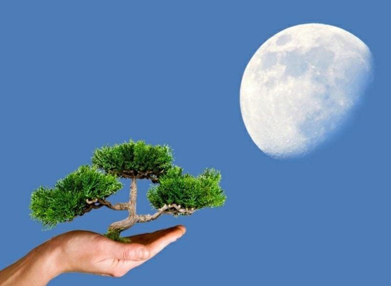 Mondkalender 2015 für Garten Einfluss des Mondes Pflanzenwachstum