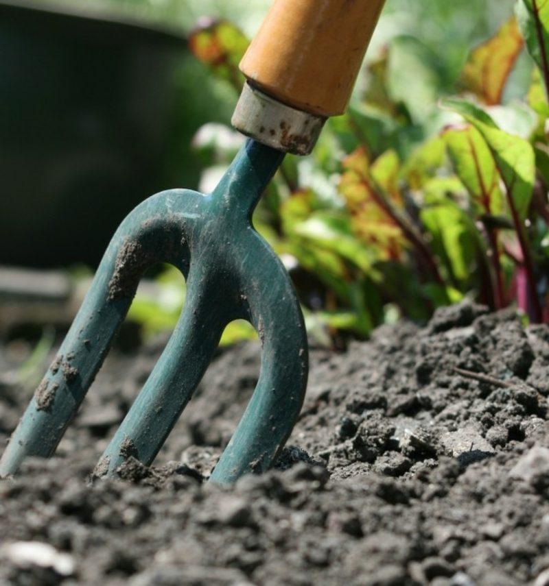 Mondkalender 2015 für Garten den richtige Zeitpunk für jede Gartenarbeit bestimmen
