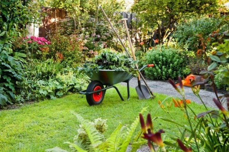 Mondkalender 2015 für Garten die Pflanzen richtig pflegen