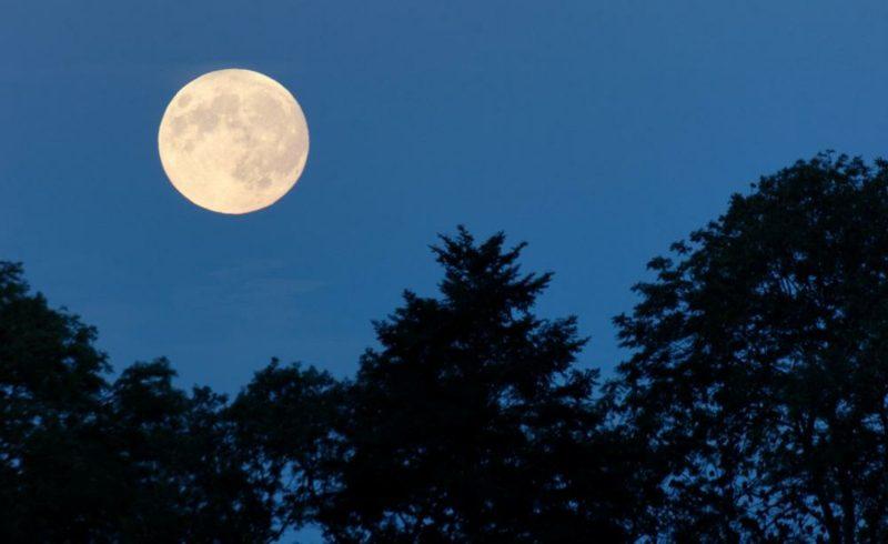 Mondkalender 2015 für Garten Vollmond Auswirkung Pflanzenwelt