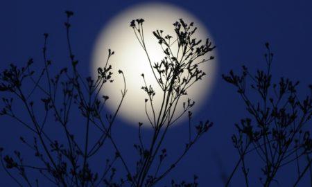 Mondkalender 2015 für Garten Vollmond Einfluss auf die pflanzen