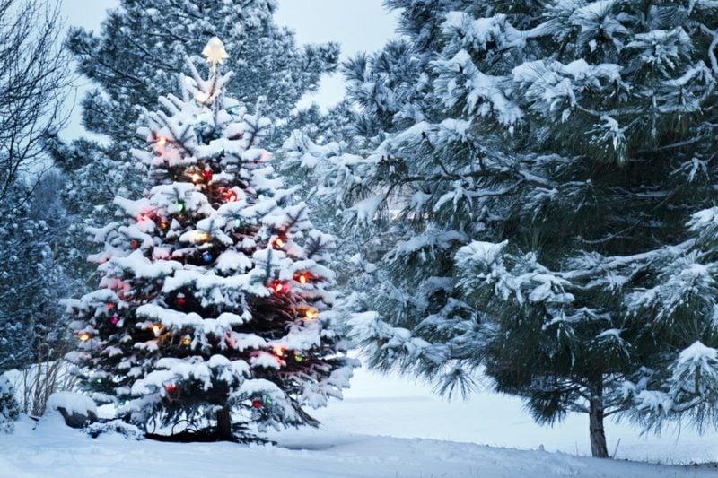 Weihnachtsbaum in der Wald herrlicher Look