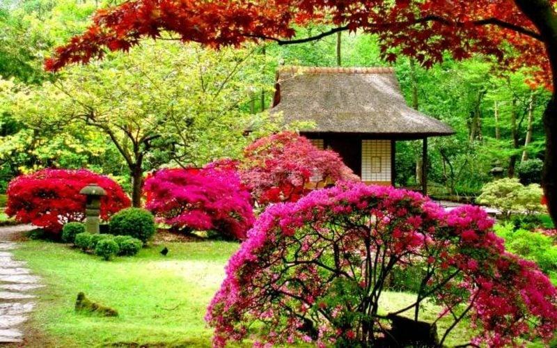 Mondkalender 2015 für Garten hilfreiche Pflegetipps