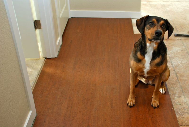 korkboden surprising types of cork flooring