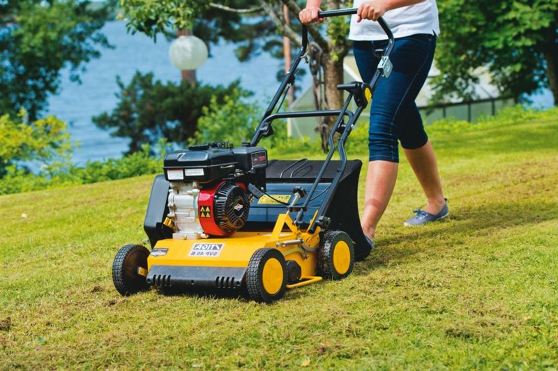 Rasen richtig vertikutieren Tipps