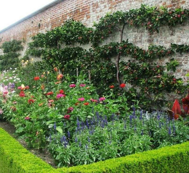 Spalierobst anbauen Gartenmauer