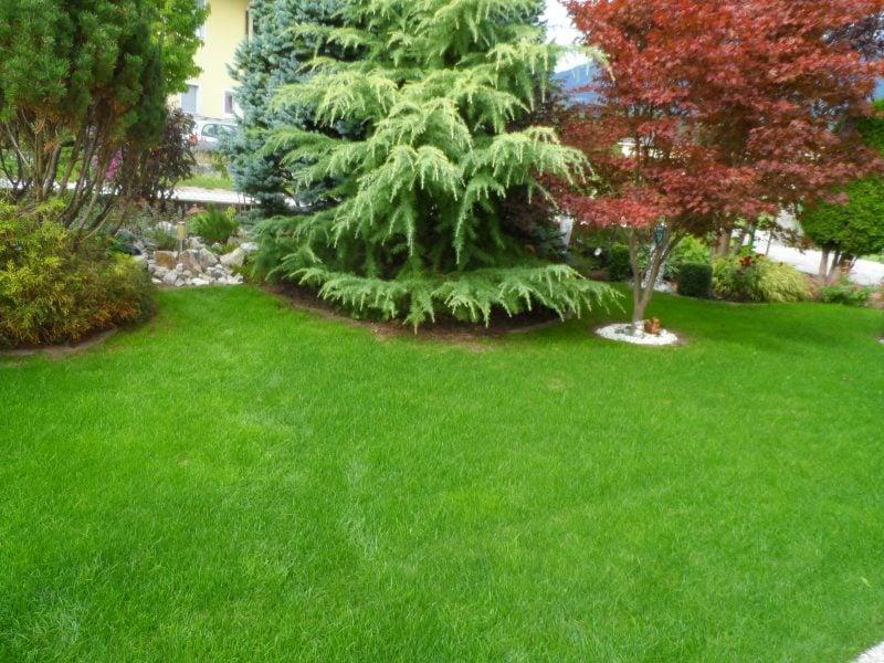 Gartenrasen idealer Zuastand richtig vertikutiert