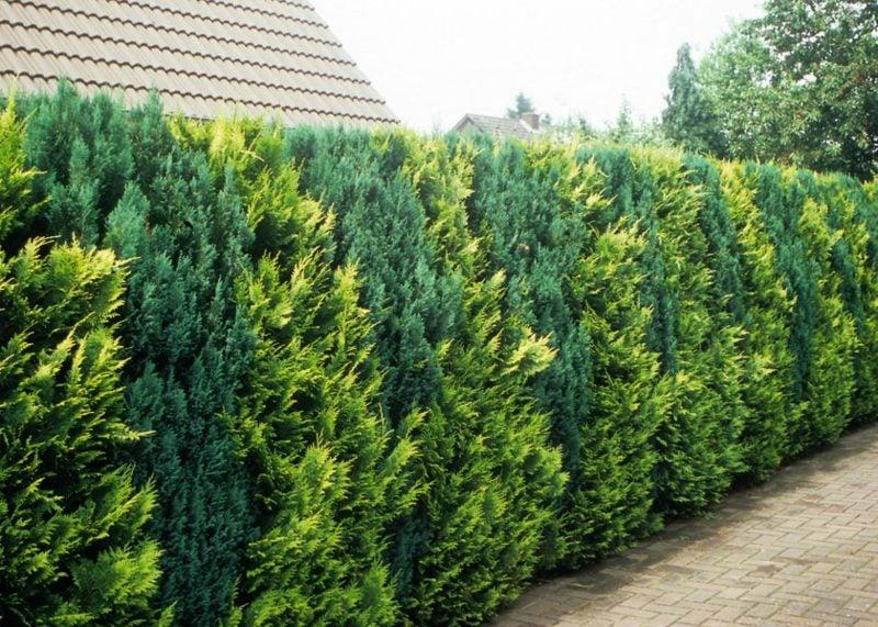 Gartengestaltung Ideen Sichtschutz Hecke hoch