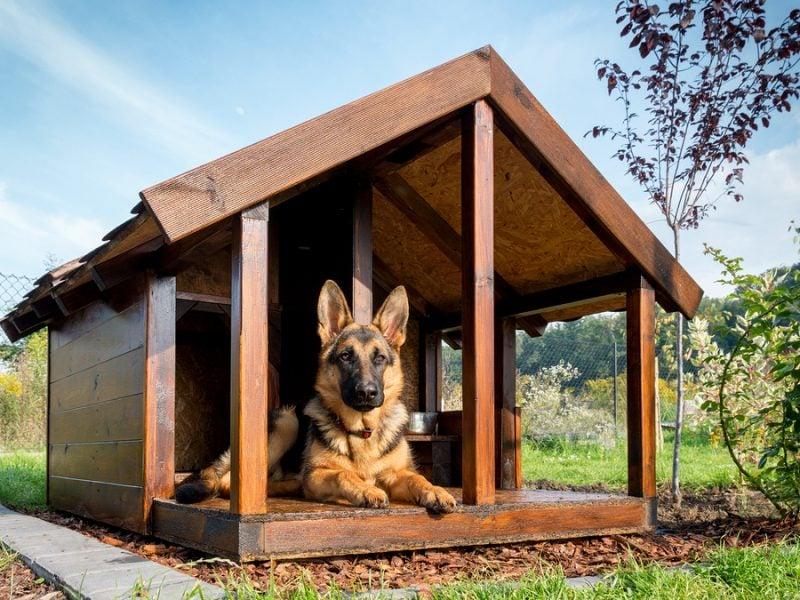 Welche Hunderassen sind für Hundezwinger selber bauen geeignet?